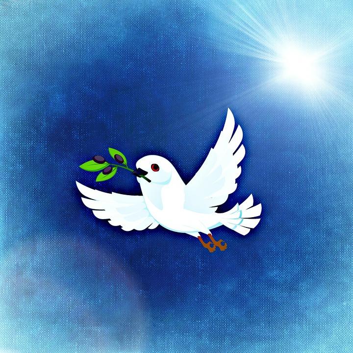 Unduh 55+ Foto Gambar Burung Merpati Putih Terbang