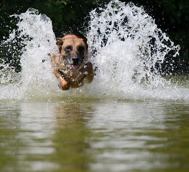 Water, Jump Into The Water, Malinois