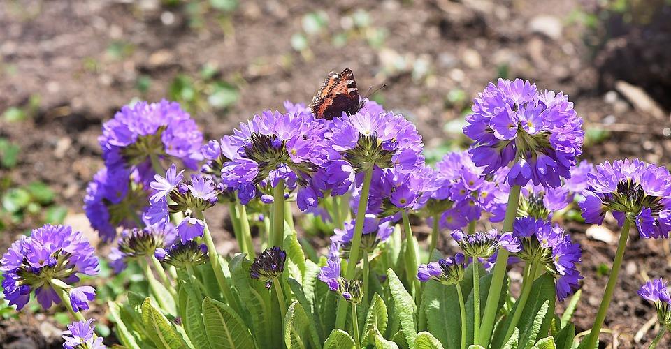 Photo gratuite fleurs pilon jardin printemps image for Fleurs jardin printemps