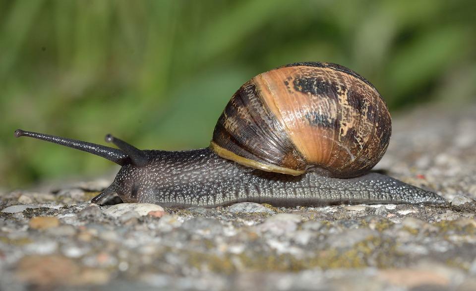 mollusc invertebrates free photo on pixabay