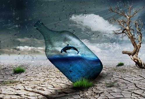 дельфин в бутылке
