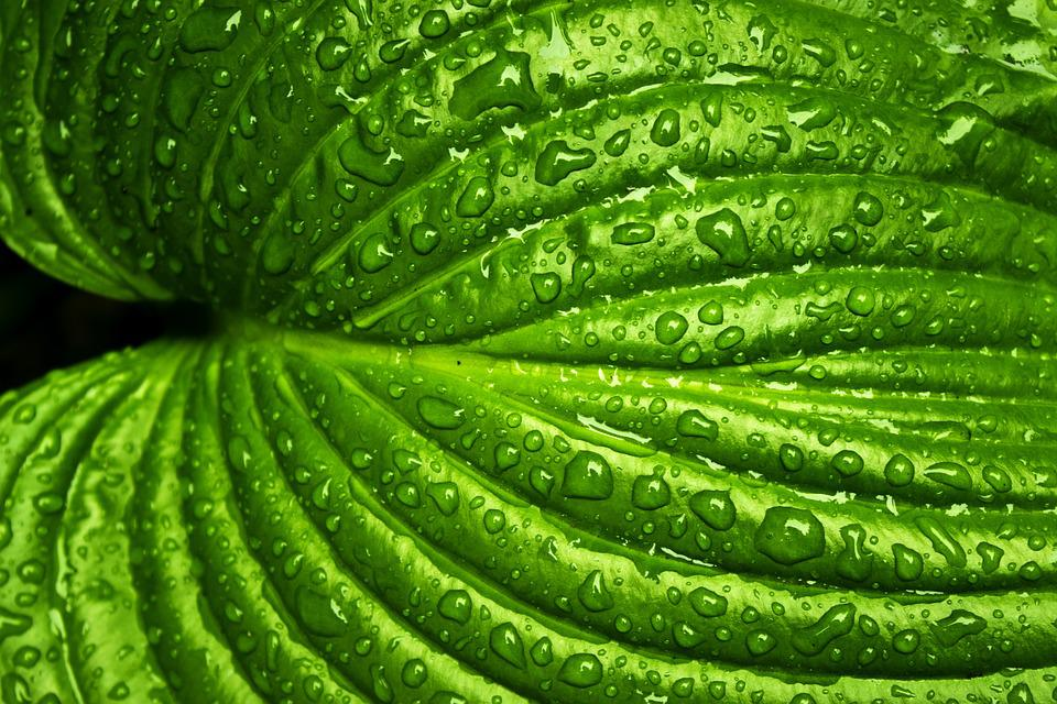 Free photo: Leaf, Rain, Spring, Nature, Green