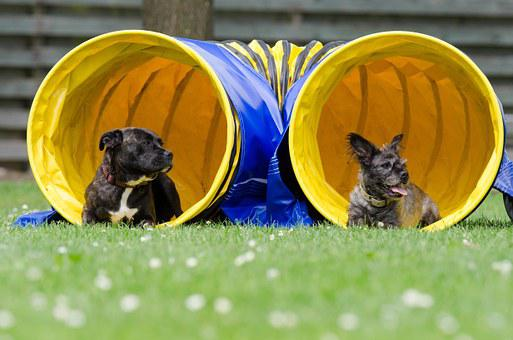 Two Dogs In The Tunnel, Agility, Tunnel