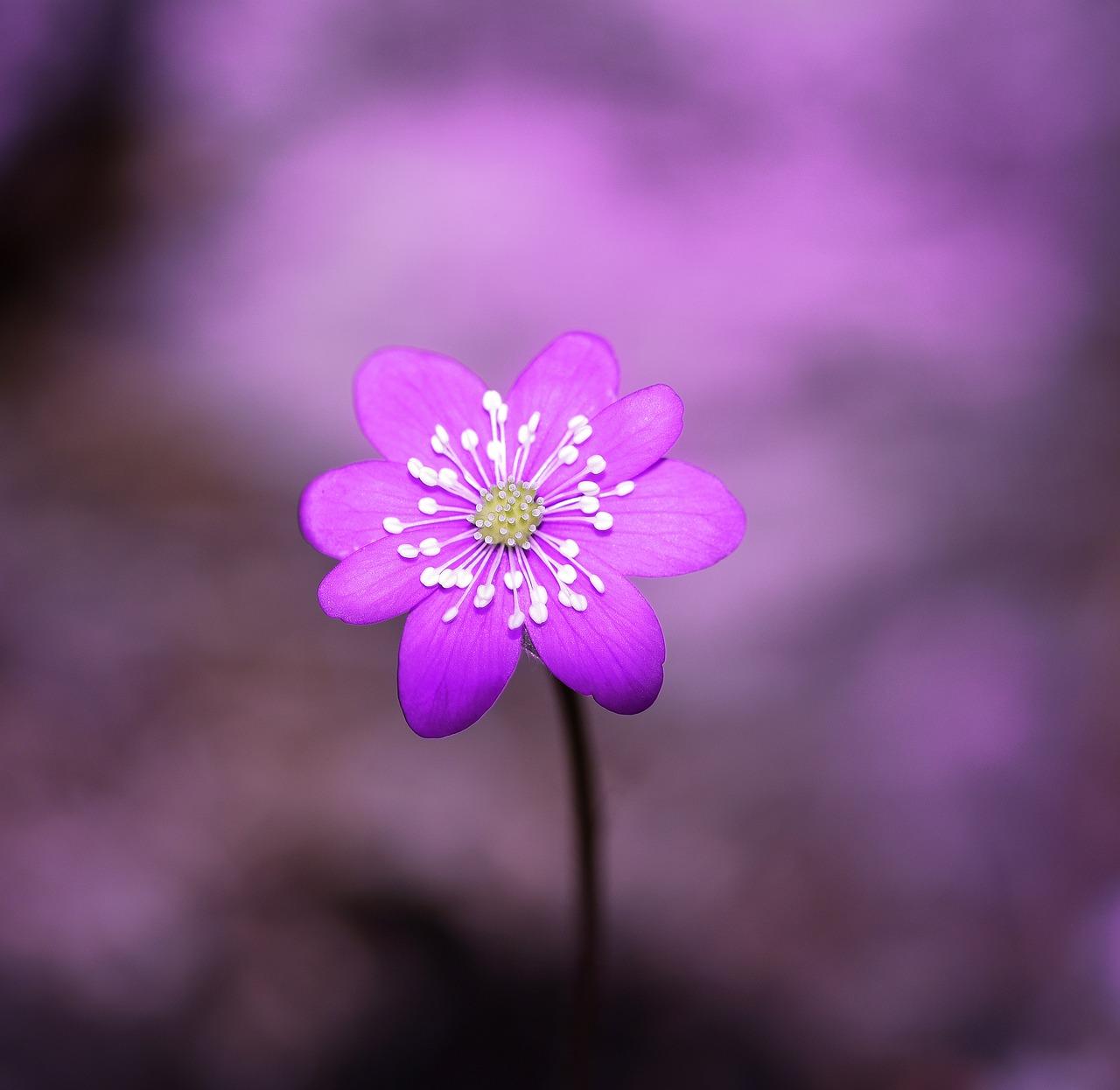 微信头像花朵唯美高清