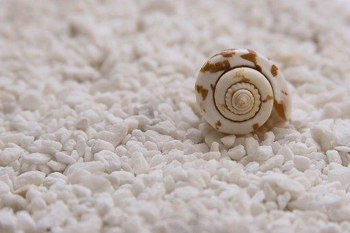 ムール貝, 貝殻, 静かな, シーン, 閉鎖, シンク, 香水, アロマセラピー