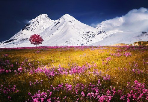 Mountains, Alps, Meadow, Tree, Flowers