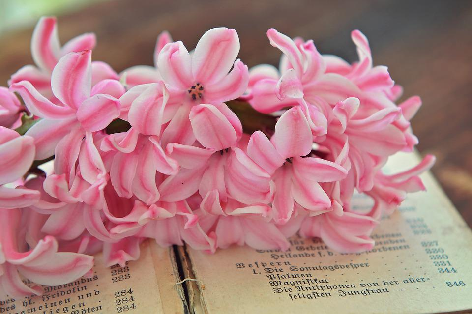 Hyacinth pink flowers free photo on pixabay hyacinth pink flowers flower fragrant flower book mightylinksfo Image collections