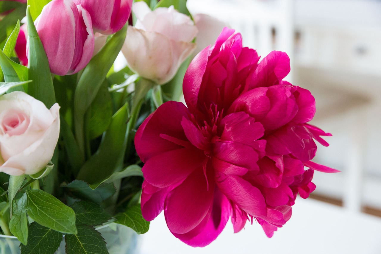 Картинки, цветы картинки роза тюльпаны
