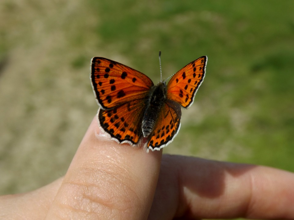 Farfalla Rosso Ali Da Foto Gratis Su Pixabay