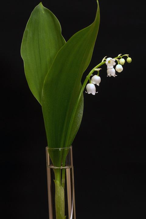 how to kill lily of the valley