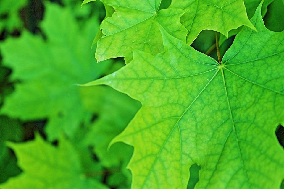 blader naturen blad gratis foto på pixabay