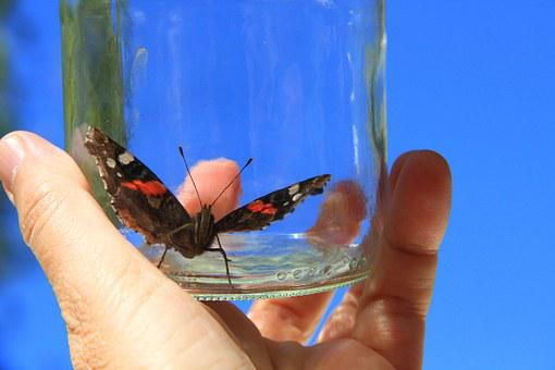 Butterfly, Hand, Glass, Bottle, Trapped