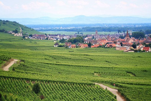 Vineyard, France, Agriculture, Vine