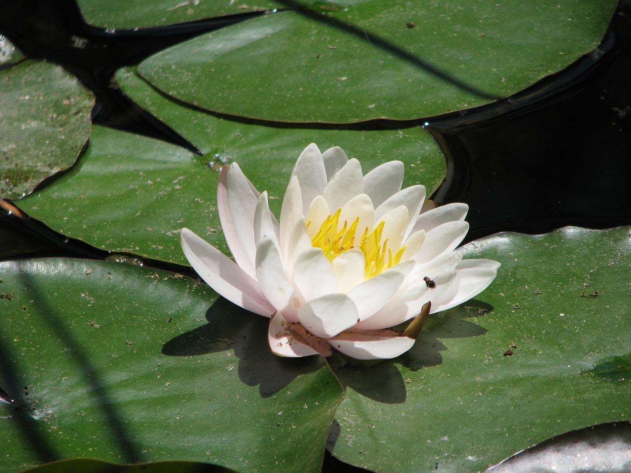 Расцветка йорков фото накапливать