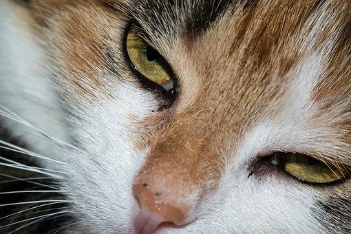 Cat, Eye, Cat'S Eye, View, Look, Watch