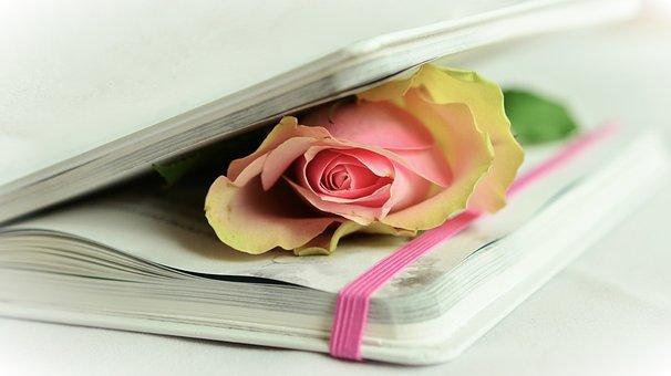 Rose, Book, Poetry, White, Pink, Tender