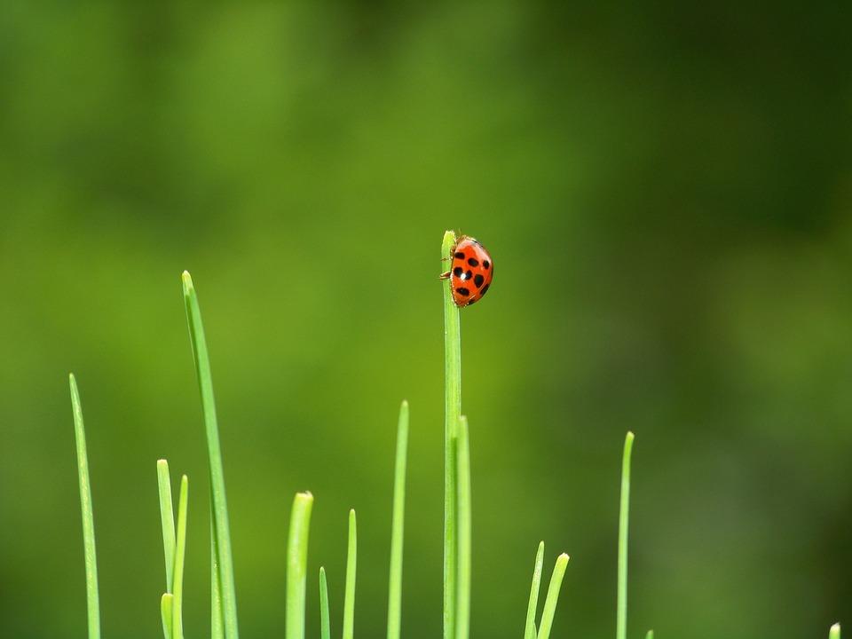 Beetle Ladybug Garden   Free Photo On Pixabay