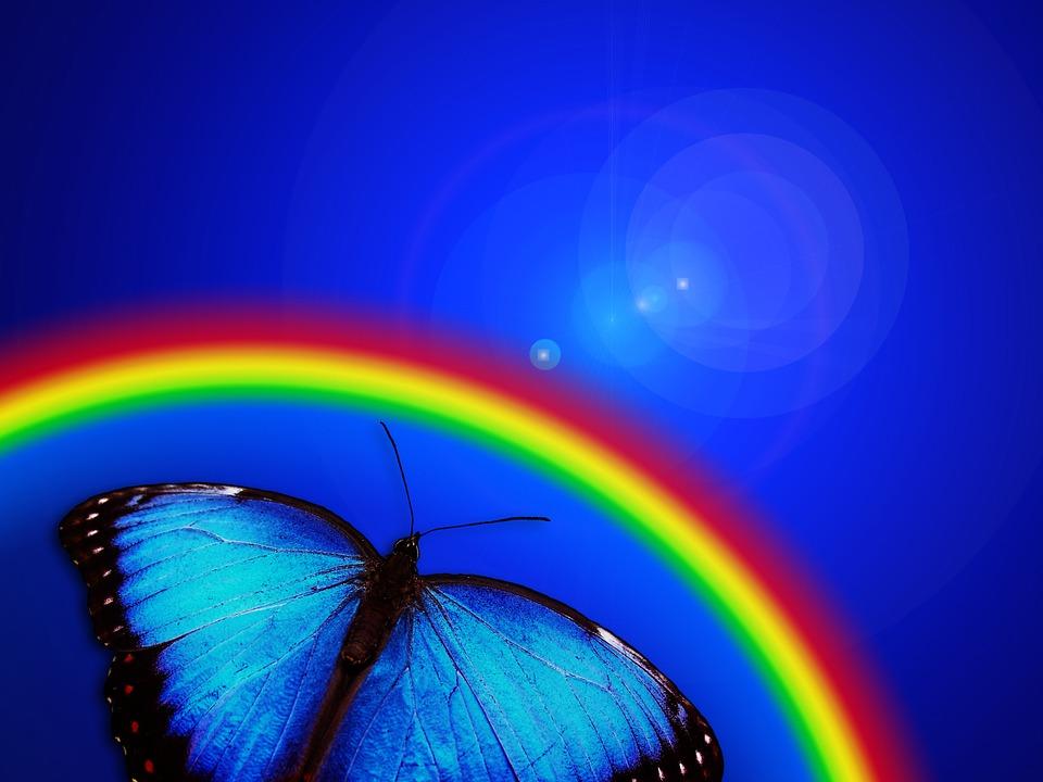 Butterfly Rainbow Light 183 Free Image On Pixabay