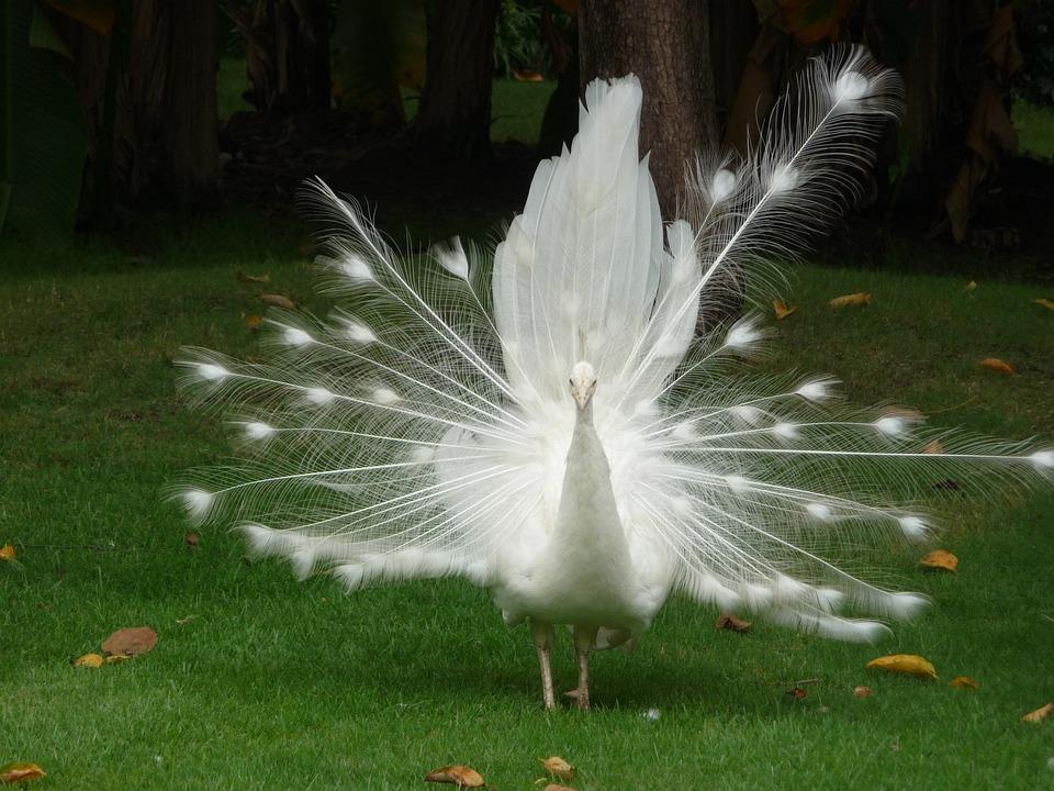 Как перебороть апатию и поймать птицу счастья