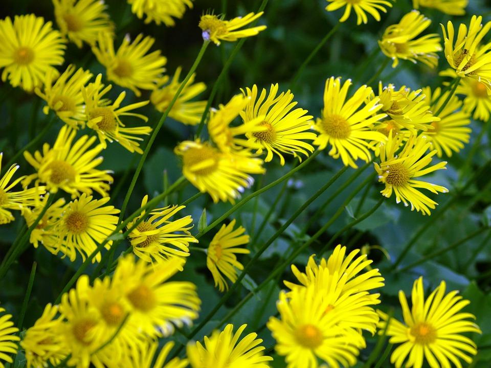 photo gratuite fleurs jaune printemps vent image gratuite sur pixabay 766850. Black Bedroom Furniture Sets. Home Design Ideas