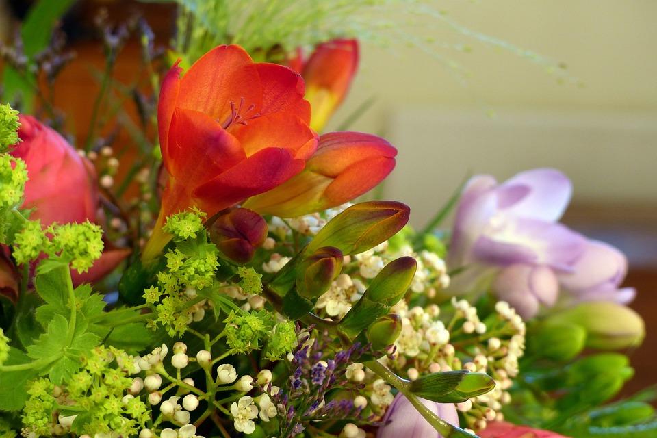 gratis foto boeket freesia de natuur bloemen gratis afbeelding op pixabay 766900. Black Bedroom Furniture Sets. Home Design Ideas