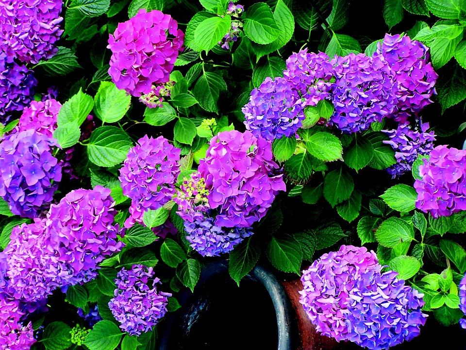 Fiori Giardino Primavera Pianta Begonia Fioritura