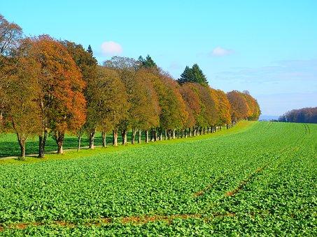 Avenue, Field, Arable, Trees, Promenade