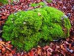 stone, moss