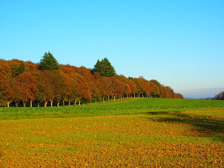 Avenue, Trees, Forest, Autumn