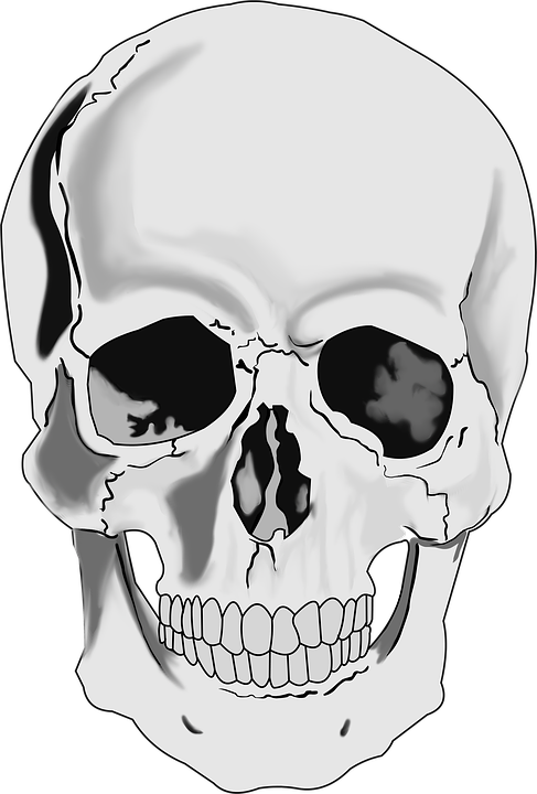 skull skeleton human free image on pixabay