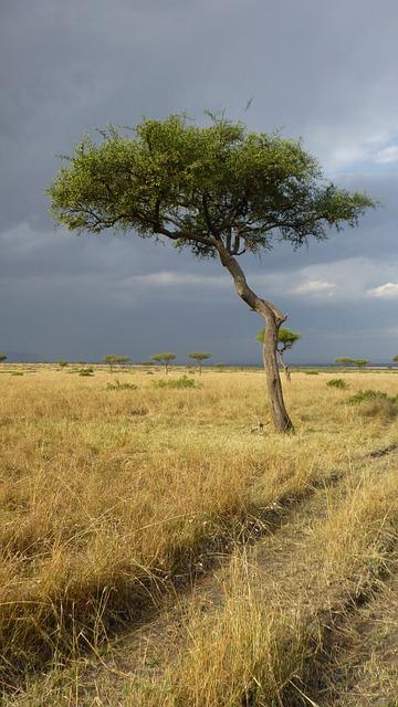 free photo  savannah  tree  africa  landscape - free image on pixabay