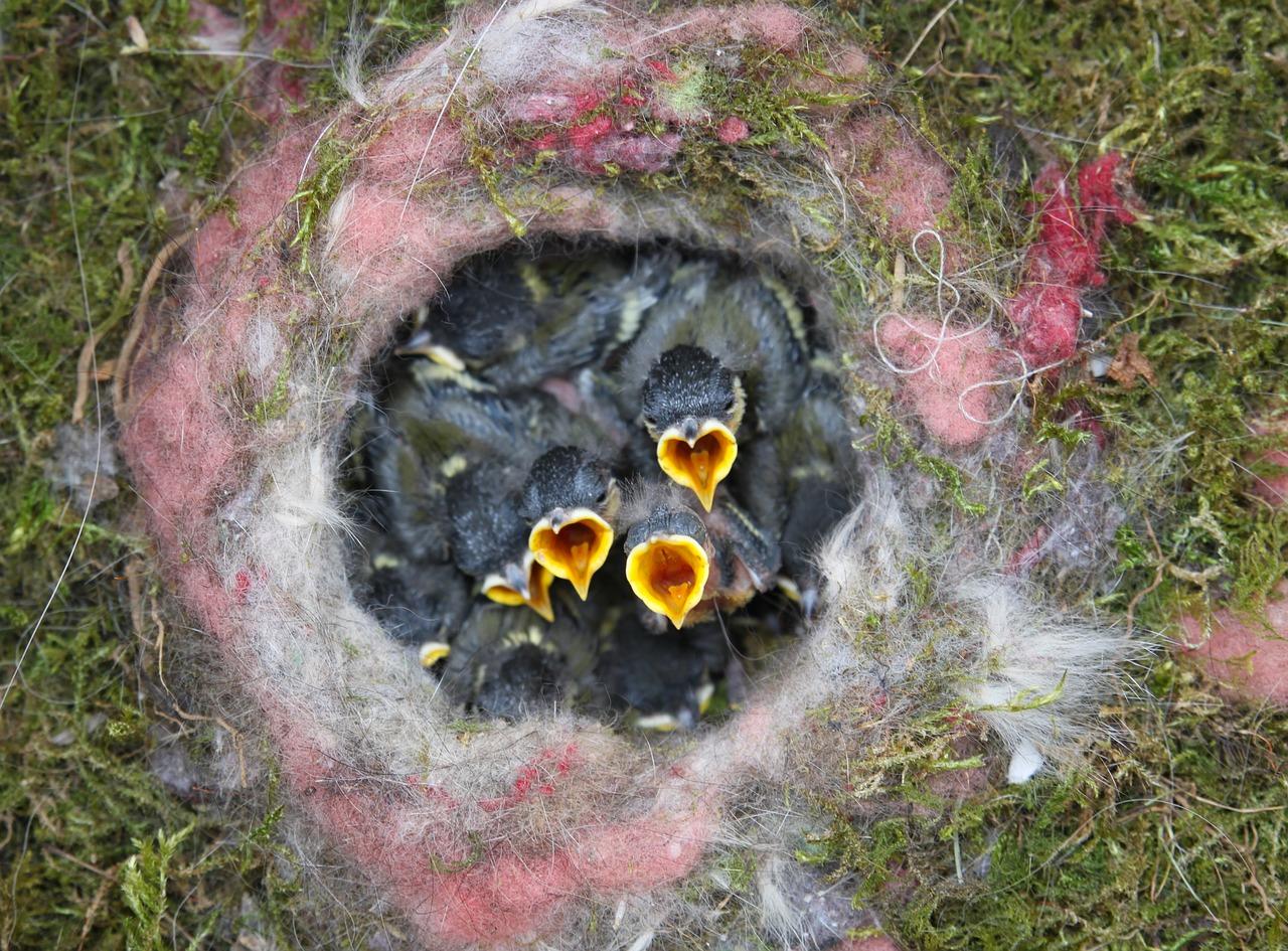 роддом проходной картинки гибель птенцов положил