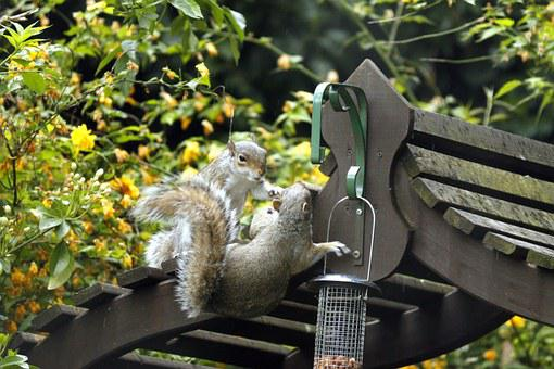 Garden, Greenery, Squirrels, Fight, Grey