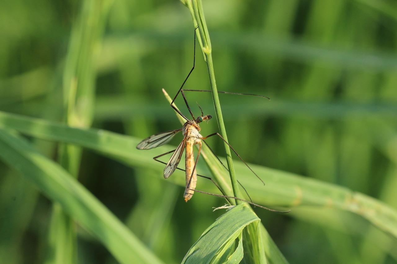 одно картинка первые насекомые сентябре прошлого года