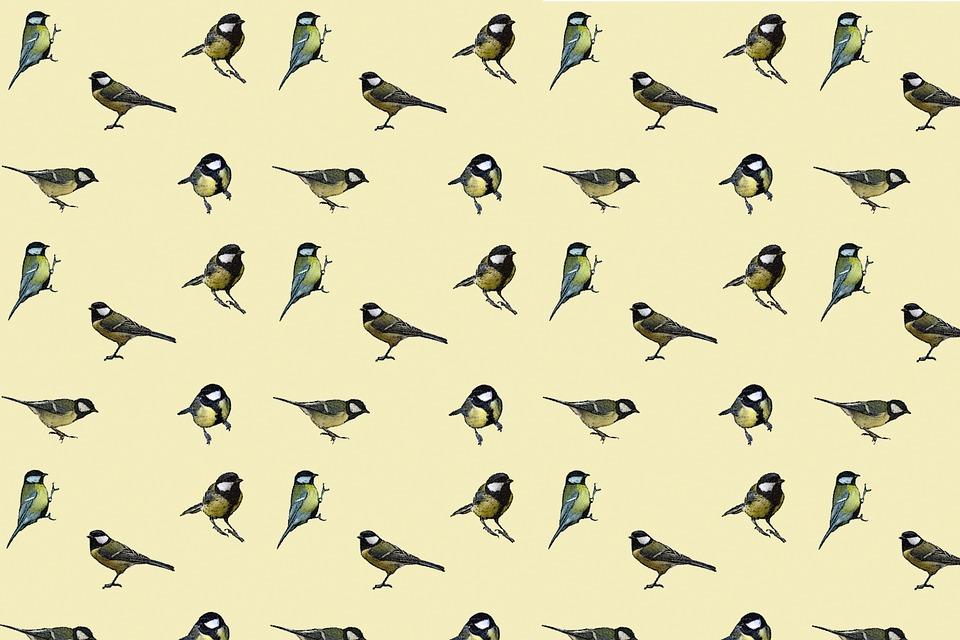 Birds Tit Tile  Free Image On Pixabay-7515