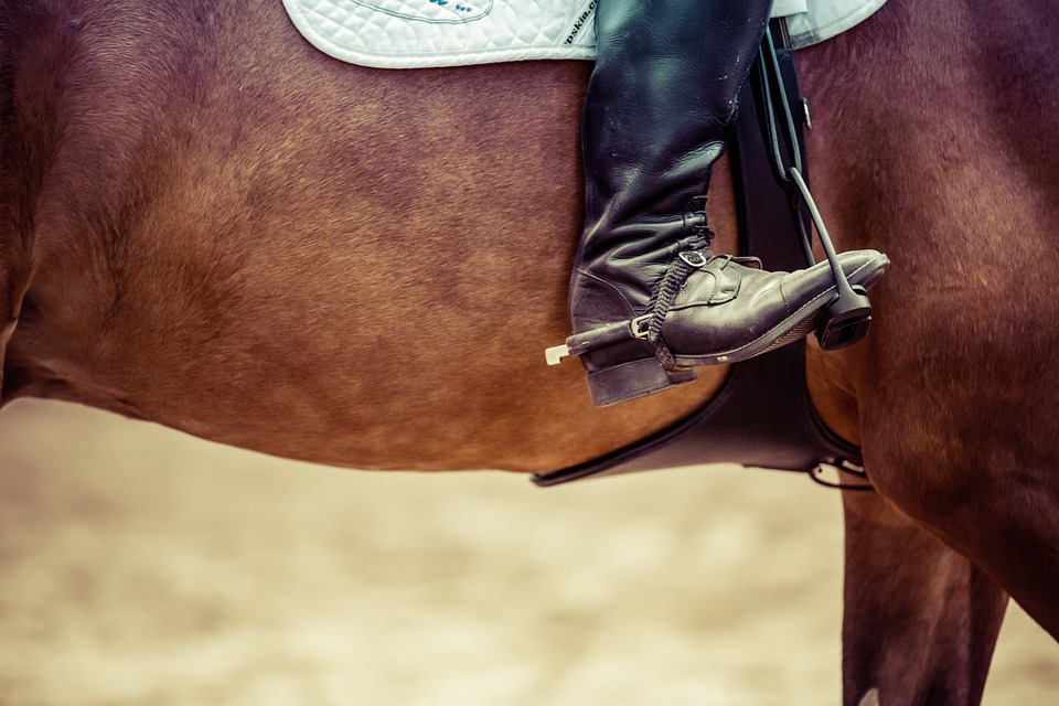 Райтер, Лошадь, Конкур, Турнир, Конный Спорт