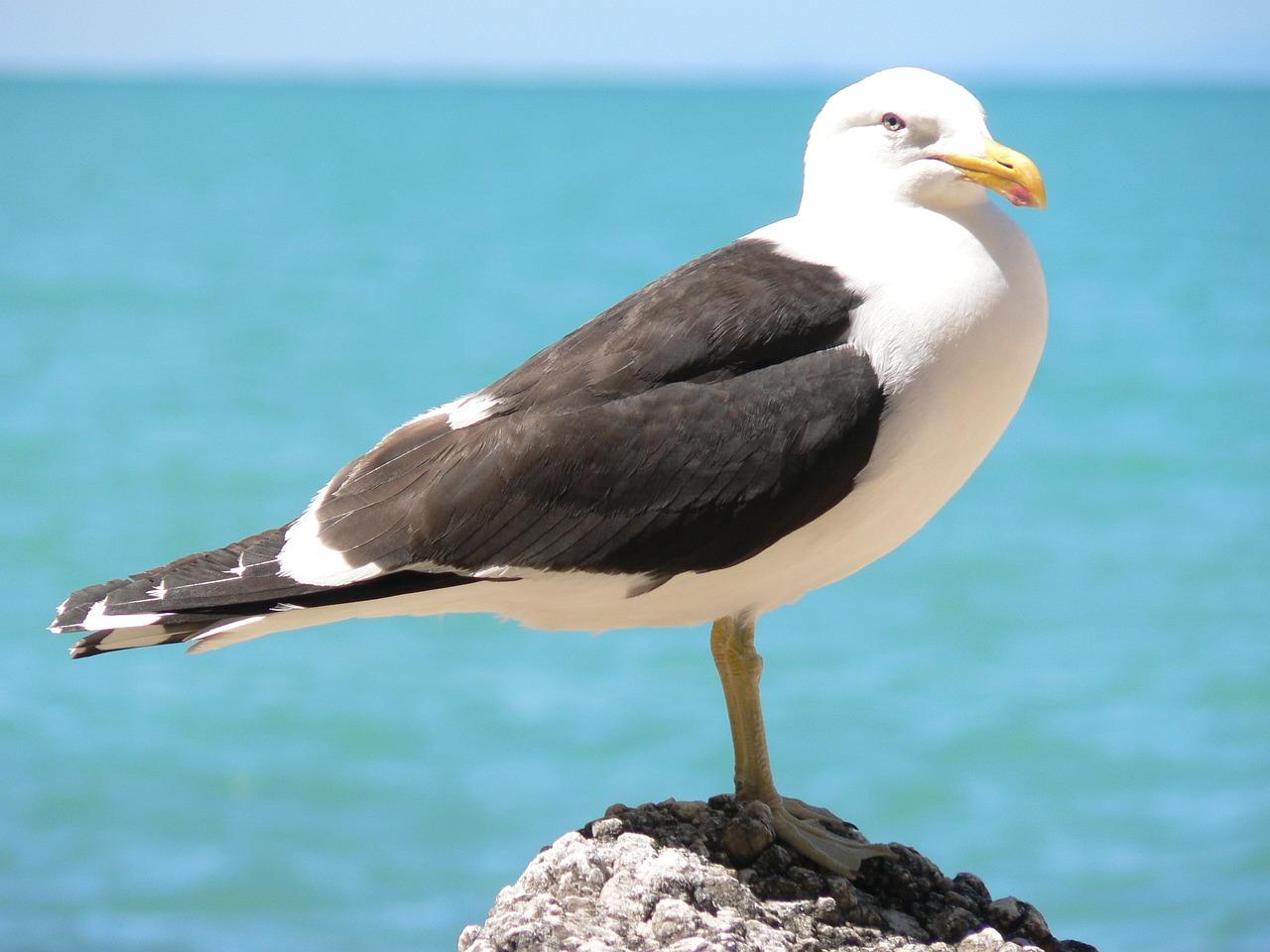 этом видео чайка фото птица большая дружная