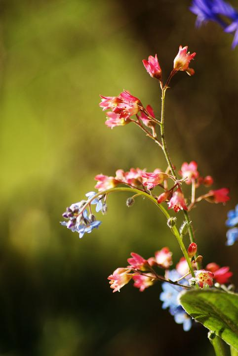 free photo small flower, spring, blue flower  free image on, Beautiful flower
