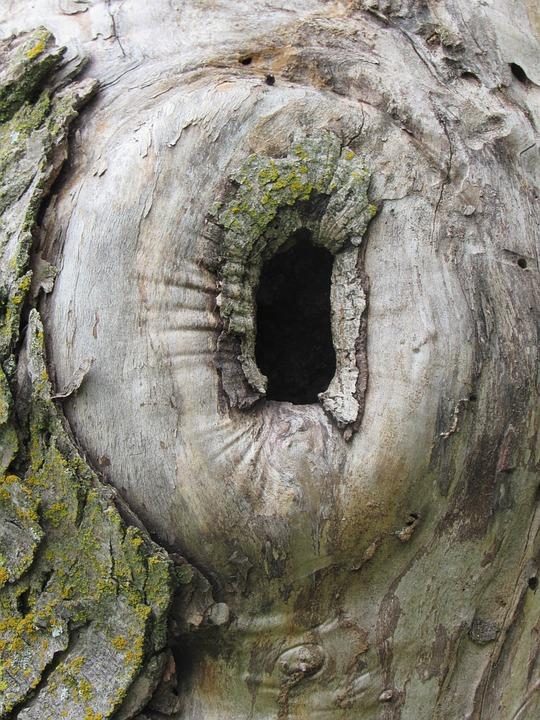 Tree Hole Hiding Place · Free photo on Pixabay