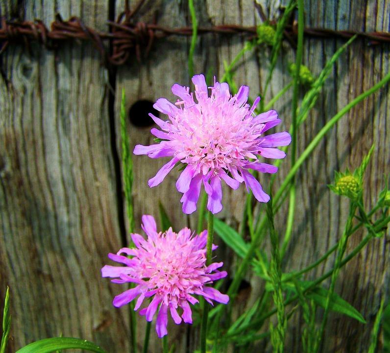 photo gratuite: violet À fleur rose prairie - image gratuite sur