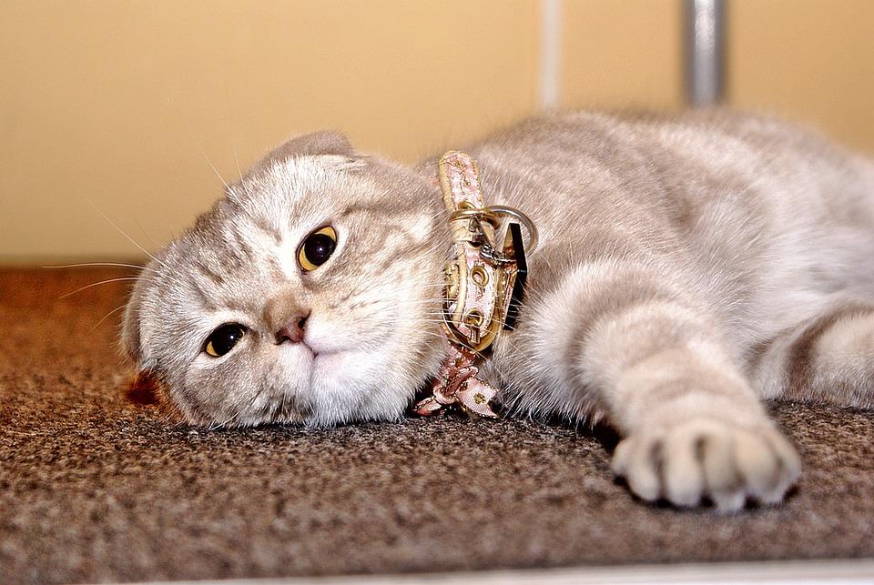 Дом уют кот