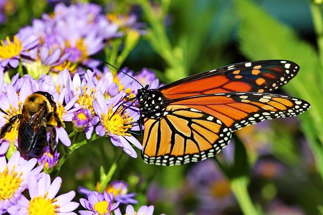 Butterfly Bee Daisy · Free photo on Pixabay
