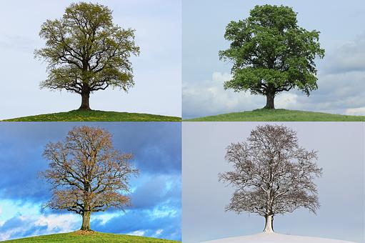 2000 Kostenlose Jahreszeiten Und Herbst Bilder Pixabay