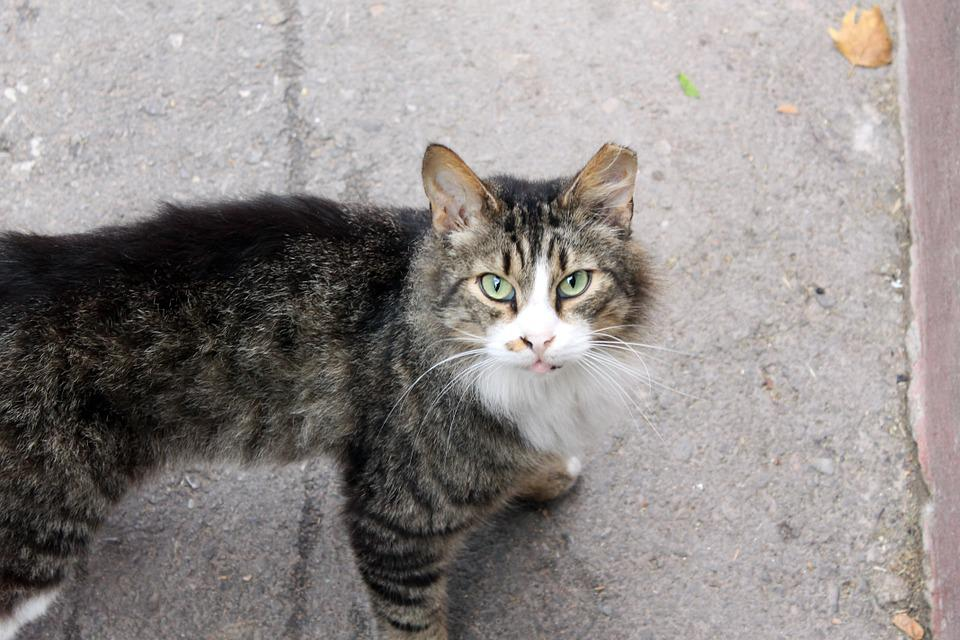 3fc6cb505d50 Γάτα Δρόμου Δρόμο - Δωρεάν φωτογραφία στο Pixabay
