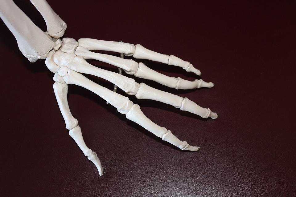 Skeleton Hand Bones Free Photo On Pixabay