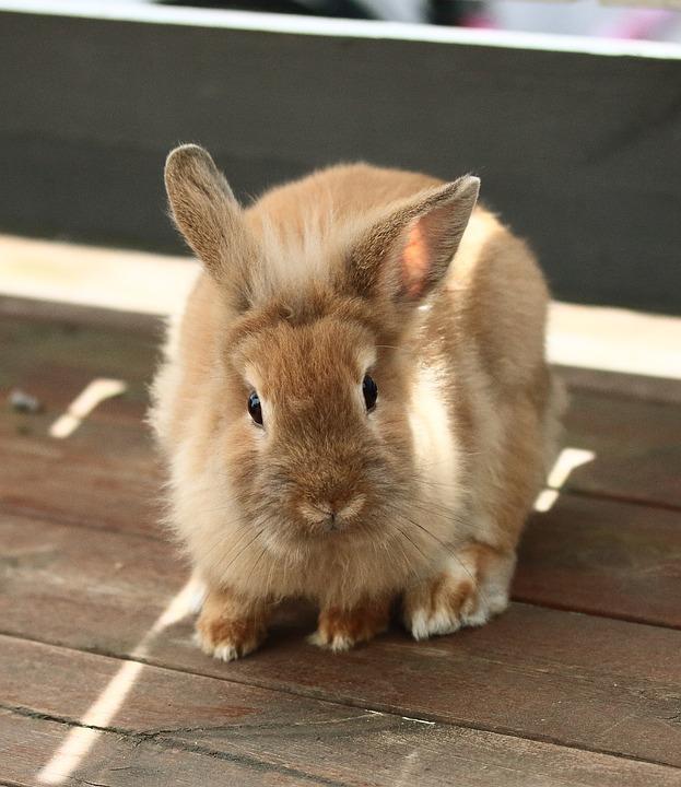 Rabbit Altan Animals · Free photo on Pixabay