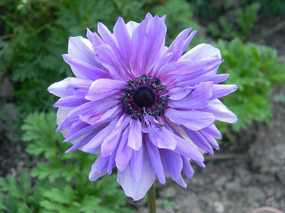 Plante Jardin Printemps Fleur Photo Gratuite Sur Pixabay