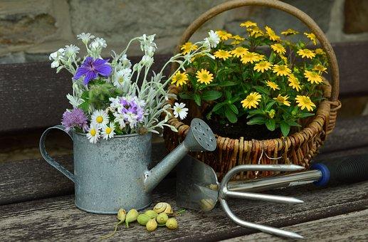 Kwiaty, Ogród, Martwa Natura