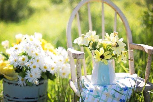 Summer, Still-Life, Daisies, Yellow