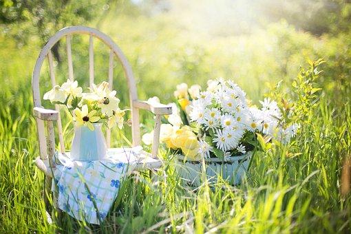 Summer Still-Life, Daisies, Yellow